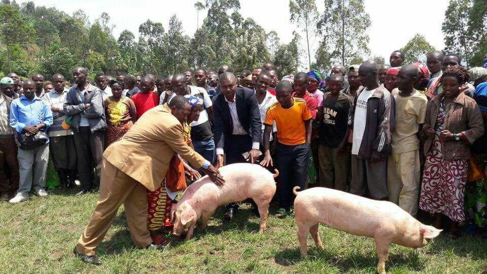 Una ONG sanluqueña manda miles de animales a Ruanda para que 800 familias salgan adelante